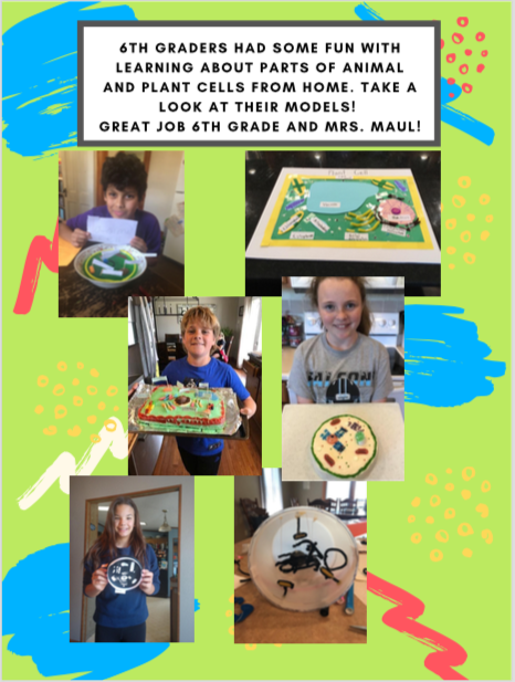 6th Gr. Cell Models